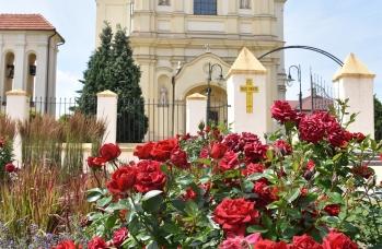 Zdjęcie: Kościół pw. Wniebowzięcia NMP w Sieniawie